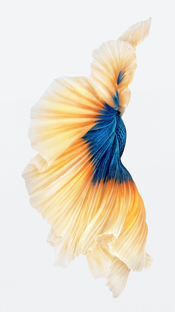 th_iPhone-6s-Fish-Gold-Wallpaper-576x1024