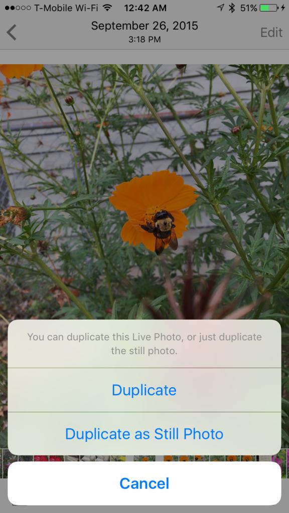 Duplicate-Live-Photos-576x1024