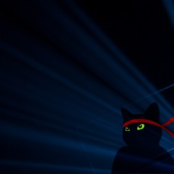 th_Windows_Insider_Anniversary-Ninjacat-3840x2160-4K